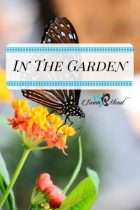 God created life in the garden. Motion and movement create life in your garden, inviting you and a host of lovely creatures into your own yard.