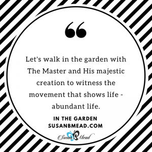 Let's walk in the garden, with The Master and His majestic creation. Let's witness the movement that shows life - abundant life.